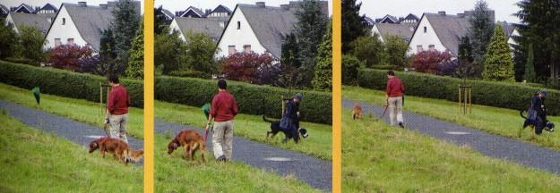 Foto di C. Sondermann del libro di M. HENSE, C. SONDERMANN, Il cane impare giocando, 2009, Fenegrò