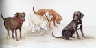 Illustrazione di I. Mulet Domingo dal libro di M. TRUYOLS FLUXA', Turid, la fatina dei cani, 2010, Fenegrò