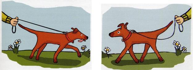 Ilustrazione di Andrea Luhr da Dominance: fact or fiction?