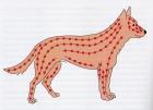 Illustrazione di Cornelia Koller da L. TELLINGTON-JONES, Il TTouch per cane, Fenegrò, 2008